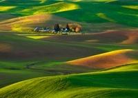 Green Velvet Palouse Hills