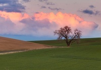 Palouse Country Road#1