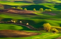 Palouse Hills Spring#1