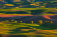 Row of Trees Early Spring Palouse