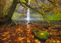 Silver Falls Autumn
