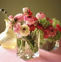 Ranunculuses in a glass vase 20052007641| 写真素材・ストックフォト・画像・イラスト素材|アマナイメージズ