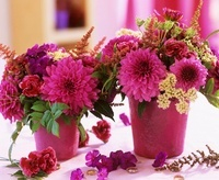 Dahlia, carnation, Phlox, Astilbe and corn parsley
