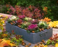 Metal box with ornamental cabbage, rose hips, hazelnuts & si