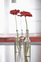 Glass bottles containing single red gerbera daisies on table