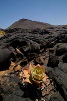 El Hierro. Canary Islands. Spain
