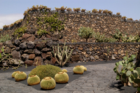 Jardin De Los Cactus. Lanzarote. Canary Islands. Spain