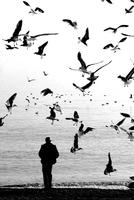 Seagulls And Man On Beach