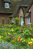 Colourful flowers in garden of Frisian traditional house with straw-thatched roof at Sankt Peter-Ording, North Frisia, Germany.