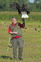 Falconer holding a Bald Eagle (Haliaeetus leucocephalus) at a birds of prey show and competition, Nijlen, Belgium. (Photo by: Ar 20053015716| 写真素材・ストックフォト・画像・イラスト素材|アマナイメージズ