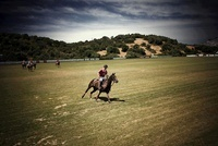 Polo player before a match