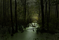 Nighttime Landscape Of Forest And Swamp