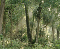 Shore Forest