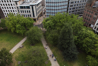 Park In City , High Viewpoint From Above, Paths To Street