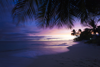 Purple Sunset Over Beach Through Palm Trees With Wave Crash
