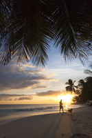 Man Playing With Dog On Beach During Sunset With Palm Trees