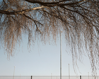 Overhanging Tree With Blue Sky, Lamp Posts And Fence
