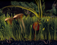 Night Shot Of Garden With Grass And Mushrooms With Earth Wor