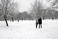 People Walking In Snowy Park On Winter Day