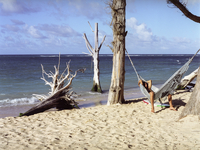 Surfer Hanging Out In Hammock By Dead Trees