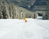 An elderly man skis down a groomed ski run.