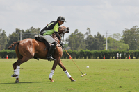 Polo player galloping and swinging a polo mallet at a ball 20055012556  写真素材・ストックフォト・画像・イラスト素材 アマナイメージズ