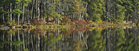 Autumn trees reflected in Lake Nawahunta, Harriman State Par