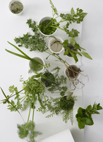 Plants, herbs