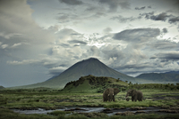 elephants in front of mountain