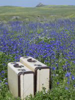 Set of luggage in a field