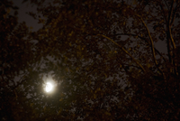 Moon At Night Through Trees