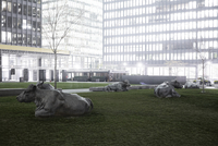 Cow statues on a patch of grass amongst skyscrapers