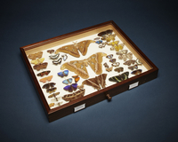 Butterfly collection from Natural History Museum