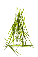 grass blades in shape of triangle