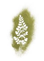 Powder of the morenga plant forming the leaf shape 20055018046  写真素材・ストックフォト・画像・イラスト素材 アマナイメージズ