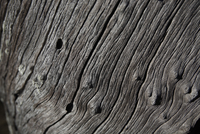 Australian Tree Bark