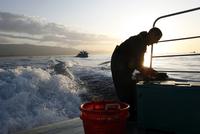 Lobster Fisherman On Boat