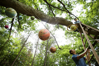 Father and son work hang paper mache solar system planets from an old oak tree.