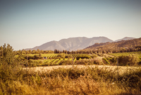 Vineyards cover a hilly and mountainous landscape with trees and bushes, sunset-mood
