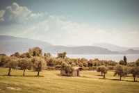 View over a meadow with olives trees and a little stone house  near a lake which is surrounded by mountains, Mediterranean summe