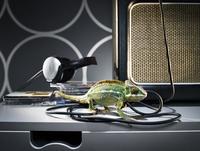 Chameleon walking on wires of a  loudspeaker.