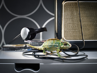 Chameleon walking on wires of a  loudspeaker. 20055023733| 写真素材・ストックフォト・画像・イラスト素材|アマナイメージズ
