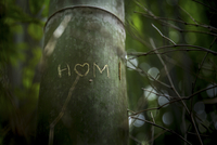Love symbol in a bamboo