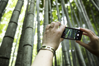 Girl taking a picture of the bamboo forest with her smart phone