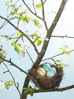 Pretty eggs in bird nest in tree