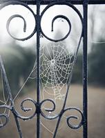frozen winter spider web