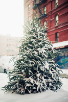 Snow-covered christmas tree