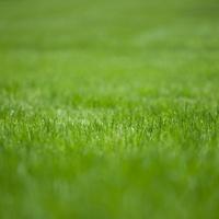 Green grass, full frame