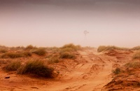 Desert in Northern Arizona, USA