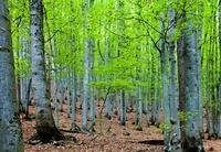 Forest near Buchenau, Bayerischerwald National Park, Germany